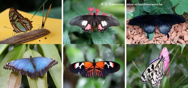 coup de coeur,papillons,animaux,jardin