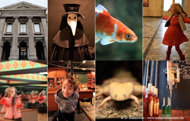 gratuit, aquarium, coup de coeur, étape, Liège, Muséum, science, poisson, animaux